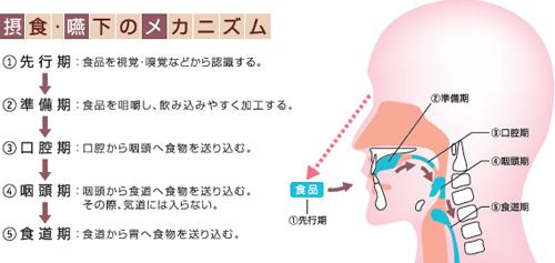 swallowing_image_mechanism